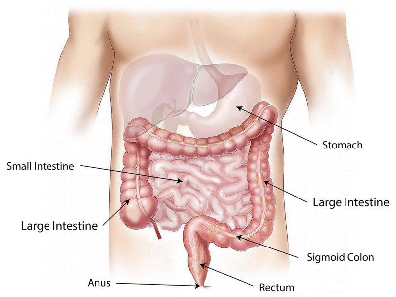 ¿Qué es el colon? | Dra. Ana García Navarro